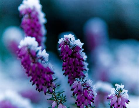 Best Flowers For Garden Best Flowers For A Winter Garden