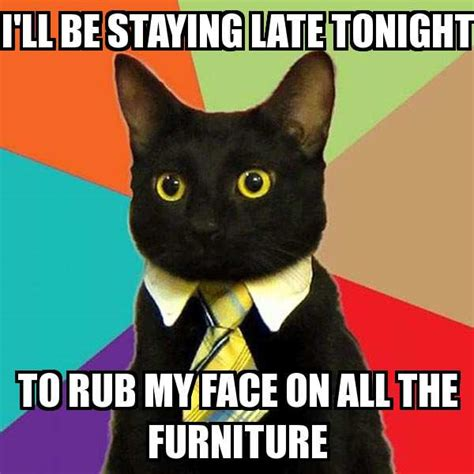 Business Cat Meme - business cat memes meme explorer