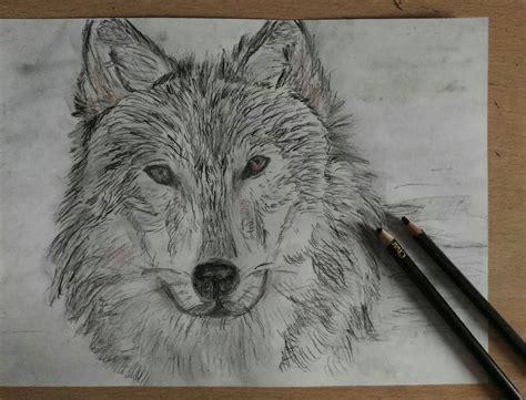 imagenes a lapiz de lobos lobo solitario carboncillo l 225 piz t 233 cnica mixta dibujos