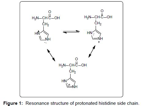 Histidine Protonation by Biochemistry Analytical Biochemistry Protonated Histidine