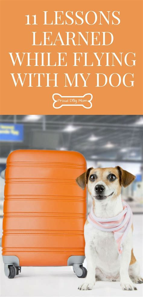flying with a puppy in cabin best 25 flying with dogs ideas on flying with pets cavapoo rescue and