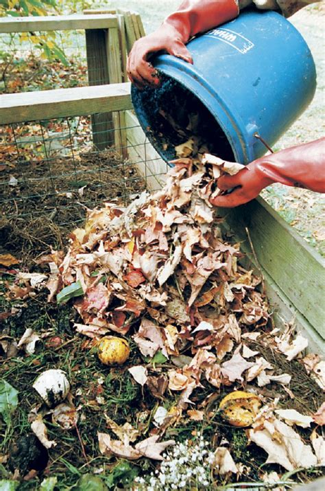 top 10 things to about home composting