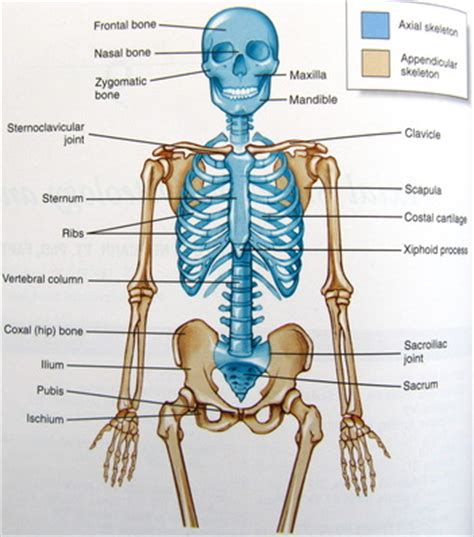 list of axial skeleton disorders pokemon go search for