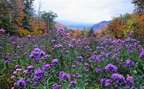 Wildflowers That Bloom In The Fall | in photos the fall wildflower bloom travel leisure