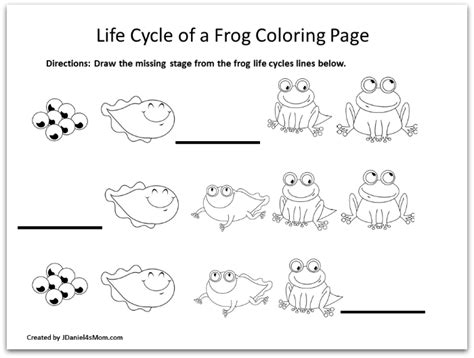 coloring page of frog life cycle frog coloring pages and learning activities