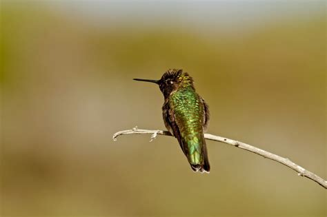 what do hummingbirds eat 28 images the hummingbird diet earth earthsky how to feed