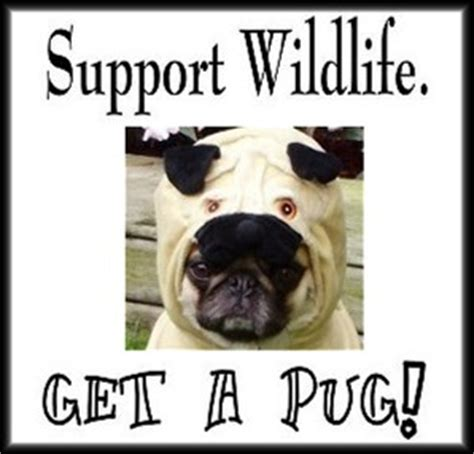 pug puppy mill against puppy mills images pug rescue wallpaper and background photos 33498106