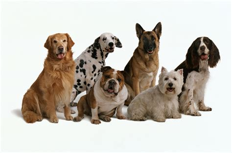 dogs in how to choose the right for you