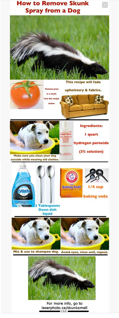 skunk smell removal  dogs tips  dog owners