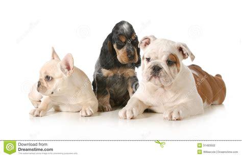 three puppies three puppies stock photography image 31493502