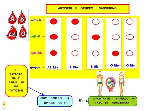 gruppo sanguigno b positivo alimentazione mappa concettuale antigeni e gruppo sanguigno