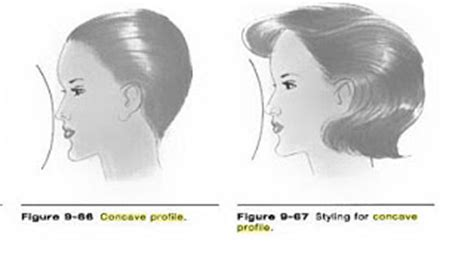 concave head shapes concave vs convex profile updated expressing your
