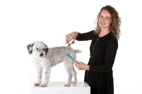 hondentrimsalon aan huis hond trimmen aan huis