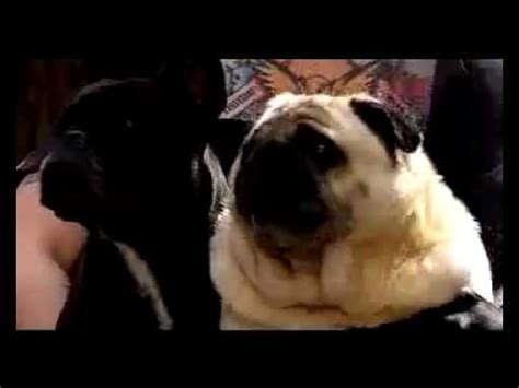 pug says batman pug says batman original