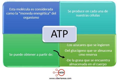 reacciones exotermicas y endotermicas biologia 1 cibertareas atp y energ 237 a en las c 233 lulas biolog 237 a 1 cibertareas