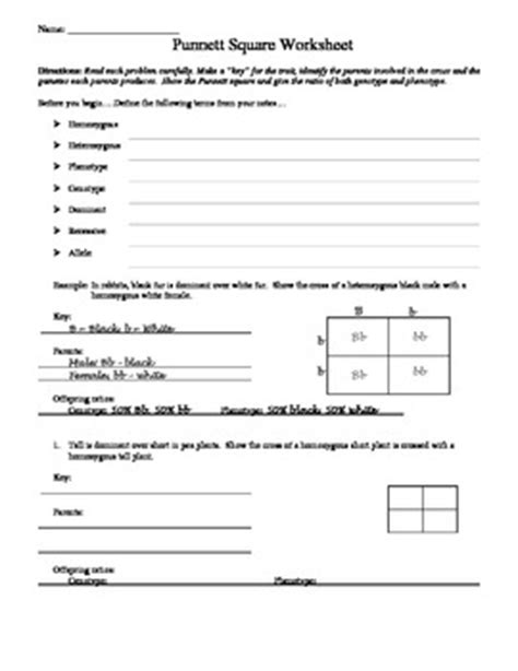 Punnett Square Worksheet 1 Answers by Punnett Square Worksheet By Aussie Science Tpt