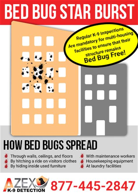 how to prevent bed bugs from spreading bed bug detection dogs azex pest solutions bed bug