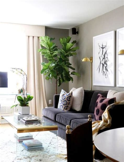 best plants for dark rooms decora 231 227 o e projetos decora 231 227 o de canto de sala de estar