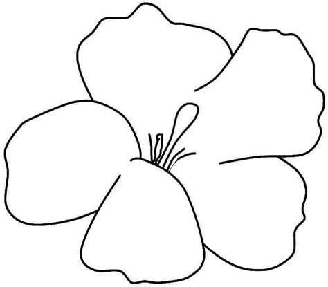 printable hibiscus flowers hibiscus coloring printable clipart best