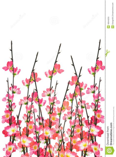 new year white flower new year cherry blossoms background royalty free