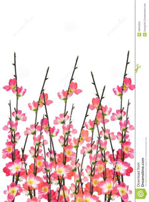 new year cherry blossom background new year cherry blossoms background stock image