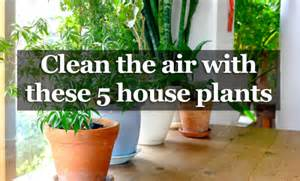 best indoor plants for oxygen 5 houseplants that produce oxygen and are impossible to kill non stop healthy