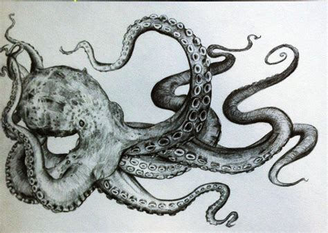 pattern drawing octopus octopus tentacles drawing tumblr top images tentacly