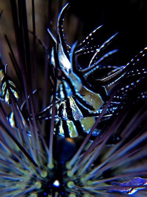 Ikan Hias Laut Letter Six Dori Tiny teknologi ini bisa jaga lautan indonesia dari kerusakan