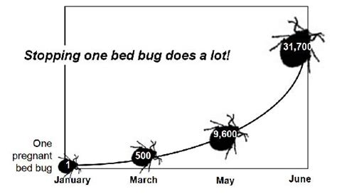 how often do bed bugs reproduce what are bed bugs learn about bed bugs from the largest