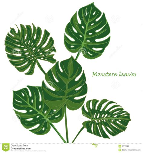 Poster Set Of 2 Tropical Leaves Cactus 2xa4 set tropical monstera leaves realistic drawing in vintage