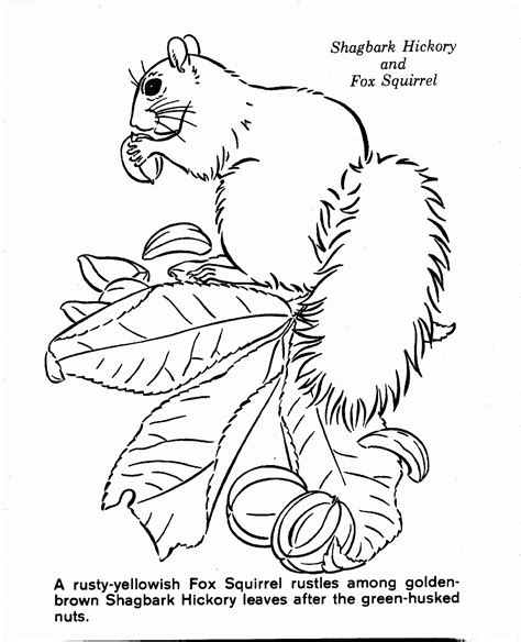 nature coloring pages online nature scenery coloring pages