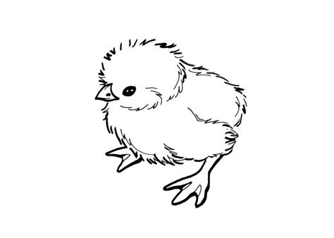 coloring page baby chick cute chick coloring pages coloring pages