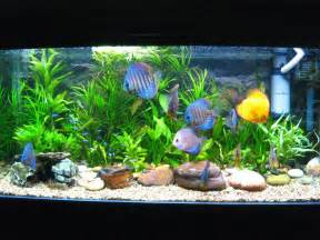 Common Fish Diseases Your Fish Might Get,freshwater aquariums