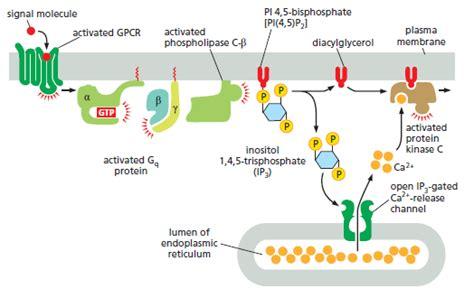 u protein trace membrane structure