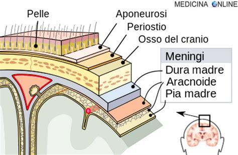 test di anatomia meningi anatomia funzioni e patologia in sintesi
