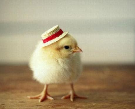 Baby Chicken Heat L by Top 10 Baby In Hats Paperblog
