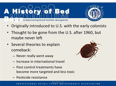 do bed bugs ever go away keeping bed bugs away can using bug spray keep bed bugs