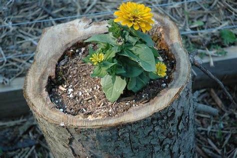 unique planters 10 creative and unique diy planters to inspire your home