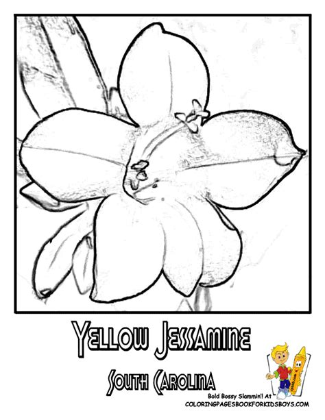 yellow jessamine coloring page usa flower coloring pages penn wyoming usa islands