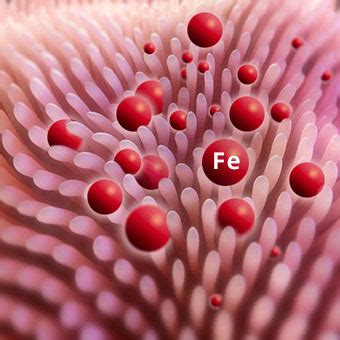 Iron In Blood ferritin blood test discover results and normal levels