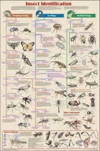 Garden Pest Identifier - zoology chart