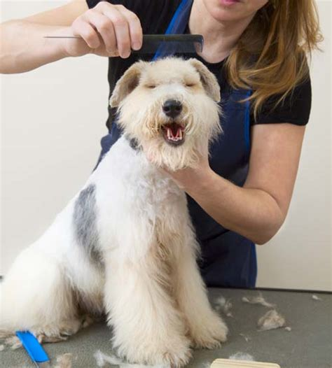how to a dogs how to become a groomer top tips