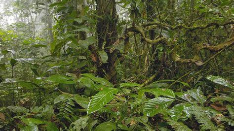 pisos en la selva del c blog de sociales 1 186 eso paisaje ecuatorial