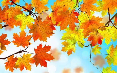 autumn leaves hd  resolution hd