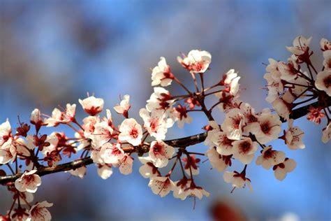 foto fiori bianchi fiori bianchi primaverili idea creativa della casa e