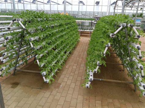 vertical hydroponic growing system indoor vegetable
