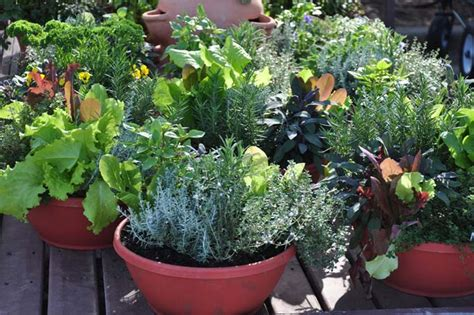 Growing Vegetables In Containers Gardener S Path Vegetable Gardening In Containers