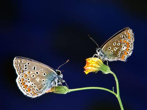 imagenes mariposas turquesas papillons