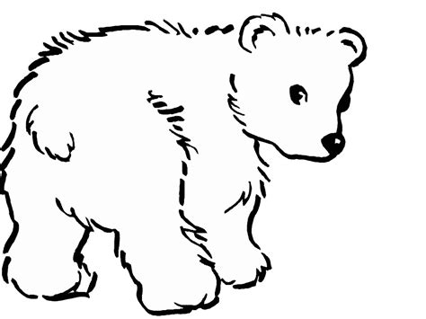 how to draw a baby polar bear images amp pictures becuo