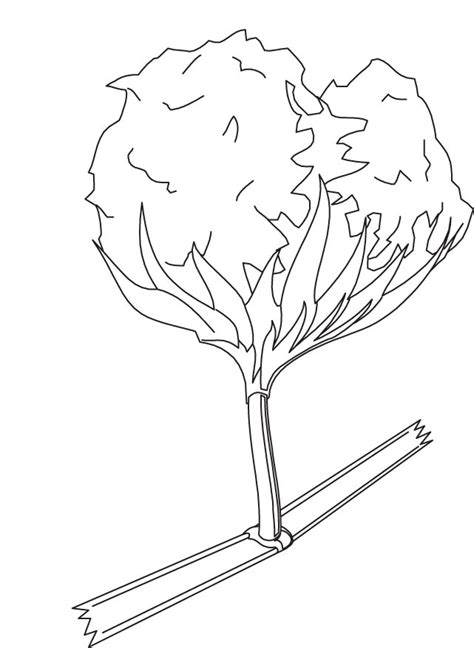 Cotton Coloring Page Download Free Cotton Coloring Page Cotton Coloring Pages